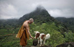 sri lanka, rescue dogs, buddhist monk, hillside hermitage