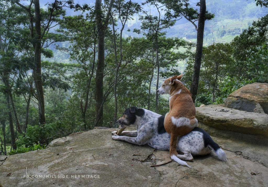 dogs, hillside hermitage, friends, sri lanka